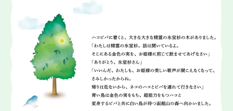 ハコビバに着くと、大きな大きな精霊の氷室杉の木がありました。 「わたしは精霊の氷室杉。話は聞いているよ。 そこにある金色の実を、お姫様に煎じて飲ませてあげなさい」 「ありがとう、氷室杉さん」 「いいんだ、わたしも、お姫様の美しい歌声が聞こえなくなって、 さみしかったからね。 帰りは危ないから、ネコのハコとビバを連れて行きなさい」 青い鳥は金色の実をもち、超能力をもつハコと 変身するビバと共に白い鳥が待つ函館山の森へ向かいました。